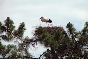 bed-en-breakfast-algarve-ria-formosa-parque-natural-storks.jpg