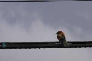 b&b-cas-al-cubo-brid-watching-bee-eater.jpg